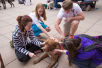 Therapy dogs help students prepare for finals.