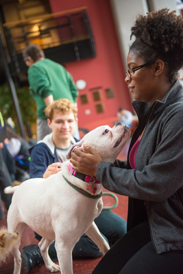 Therapy dogs help ease the pain of finals.